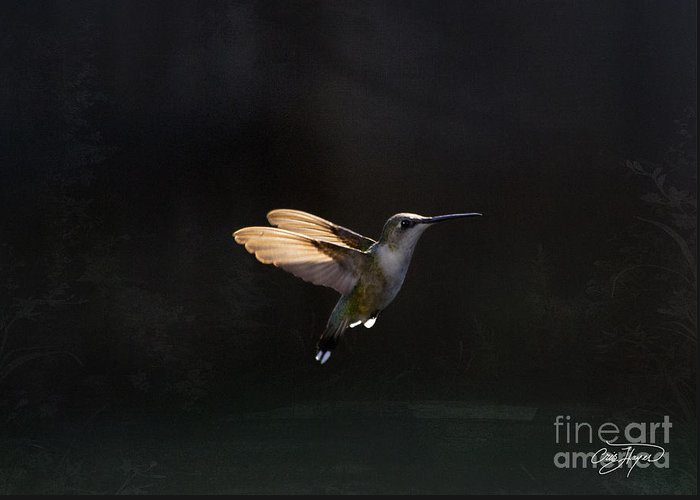 Hummingbird Greeting Card featuring the photograph Angel Wings At Sunset by Cris Hayes