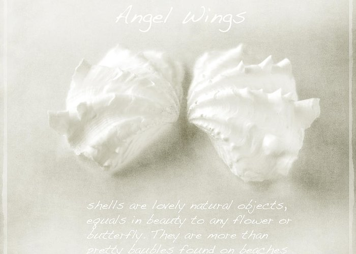 Angel Wing Shells Greeting Card featuring the photograph Angel Wings by Linde Townsend