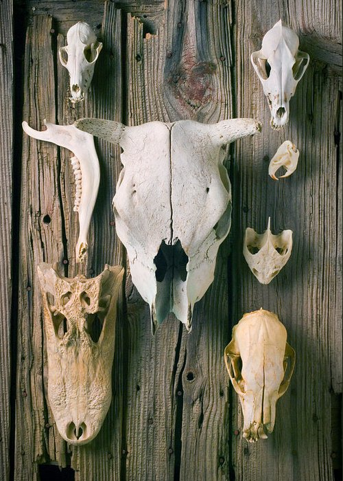 Skull Greeting Card featuring the photograph Animal Skulls by Garry Gay
