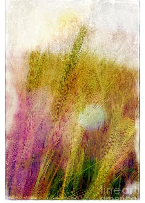 Field Greeting Card featuring the photograph Another Field Of Dreams by Judi Bagwell