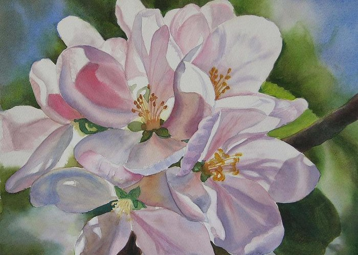 Apple Blossom Greeting Card featuring the painting Apple Blossoms by Sharon Freeman