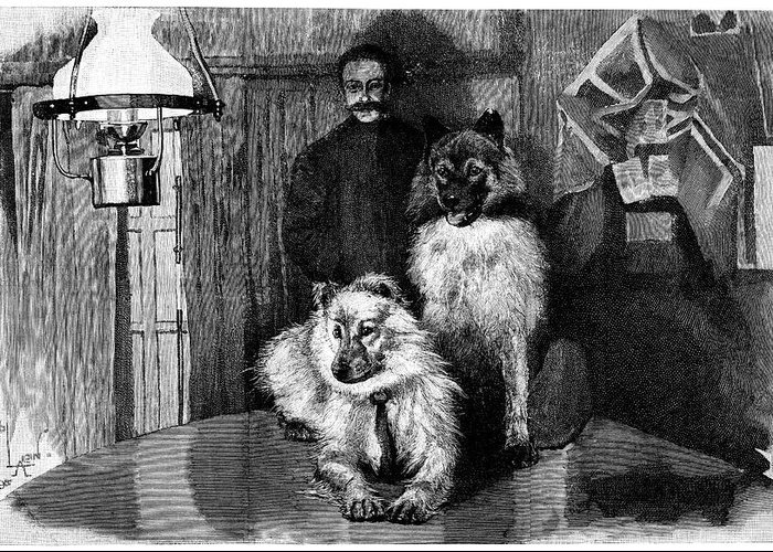 Frederick George Jackson Greeting Card featuring the photograph Arctic Explorer And Dogs, 19th Century by