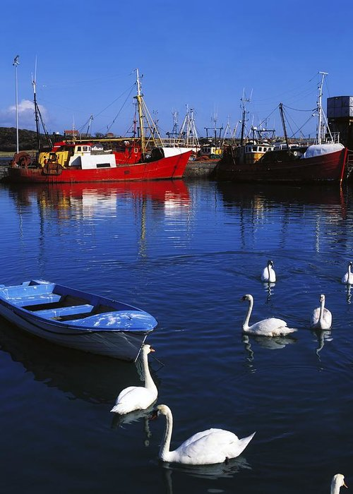 Ardglass Greeting Card featuring the photograph Ardglass, Co Down, Ireland Swans Near by The Irish Image Collection