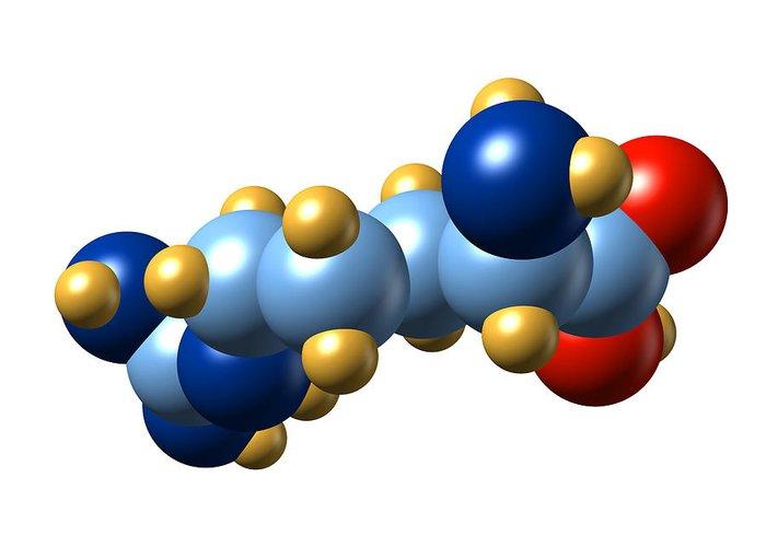 Arginine Greeting Card featuring the photograph Arginine, Molecular Model by Dr Mark J. Winter