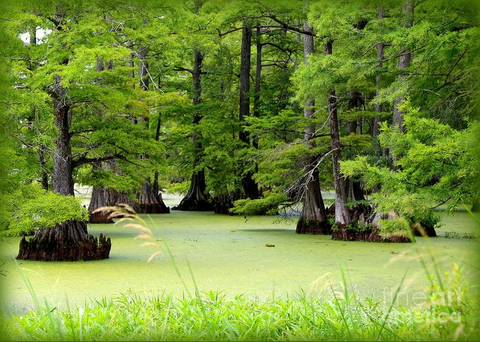 Lake Greeting Card featuring the photograph Arkansas Lake With Cypresses by Carol Groenen