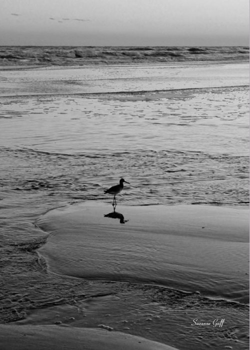 Bird Greeting Card featuring the photograph At Twilight In Black And White by Suzanne Gaff