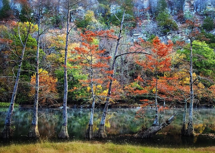 Trees Greeting Card featuring the photograph Autumn At Beaver's Bend by Tamyra Ayles