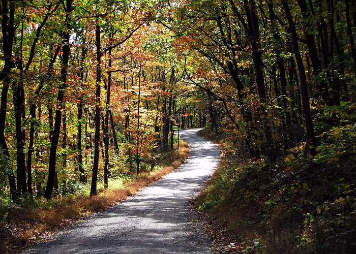 Autumn Greeting Card featuring the photograph Autumn Country Lane by David Dehner