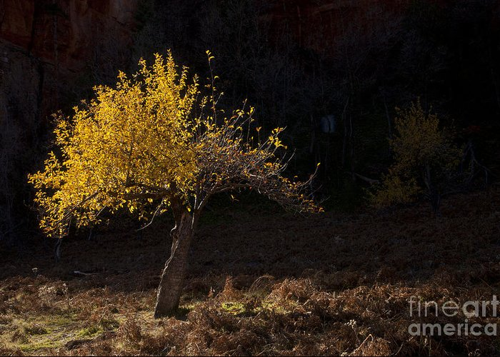 Autumn Greeting Card featuring the photograph Autumn Light by Mike Dawson