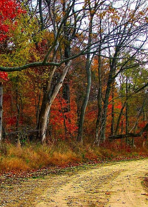 Bottomlands Greeting Card featuring the photograph Autumn On Bottomland Road by Julie Dant