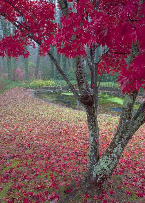 Red Photographs Greeting Card featuring the photograph Autumn Red by Rob Travis
