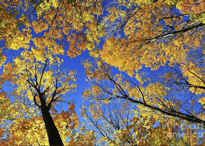 Autumn Greeting Card featuring the photograph Autumn Treetops by Elena Elisseeva