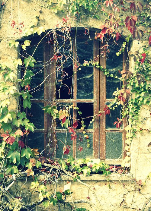 Abandoned House Greeting Card featuring the photograph Autumn Vines Across A Window by Georgia Fowler