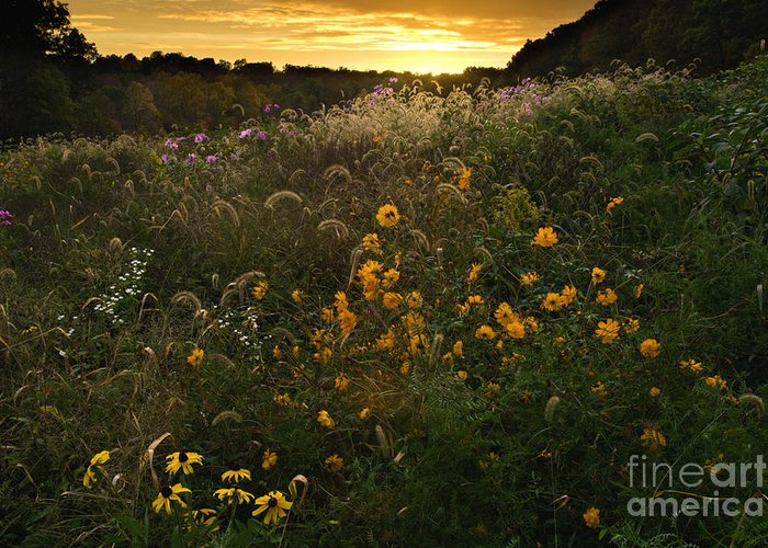 Sun Greeting Card featuring the photograph Autumn Wildflower Sunset - D007757 by Daniel Dempster