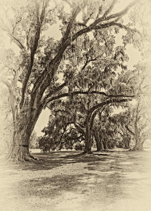 Evergreen Plantation Greeting Card featuring the photograph Back To The Future Antique Sepia by Steve Harrington