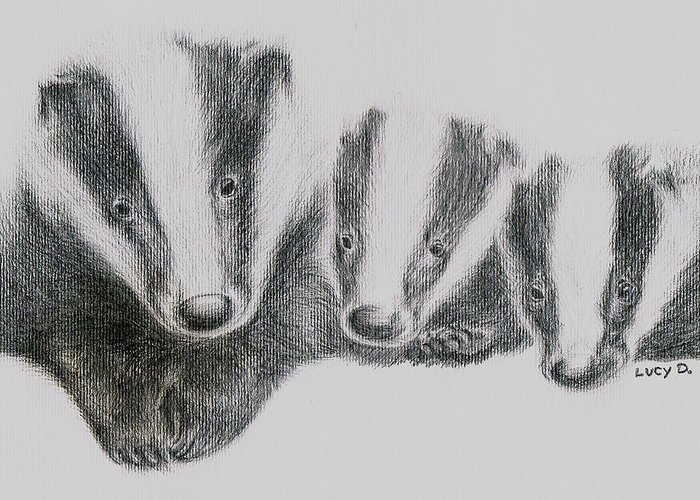Badgers Greeting Card featuring the drawing Badgers by Lucy D