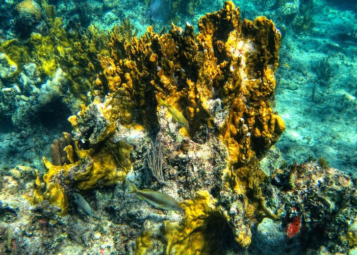 Coral Reef Greeting Card featuring the photograph Bahamas 049 by Lance Vaughn