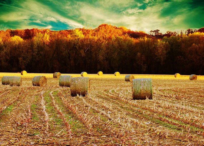 Hay Greeting Card featuring the photograph Bales Of Autumn by Bill Tiepelman
