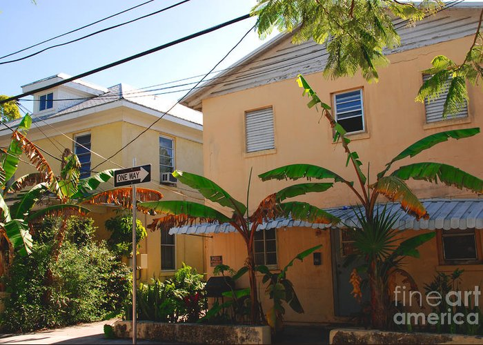 Banana Greeting Card featuring the photograph Banana Tree Lane In Key West by Susanne Van Hulst