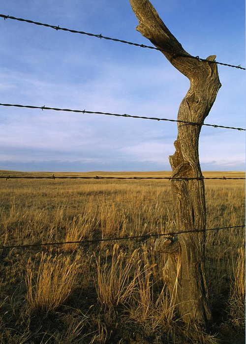 Color Image Greeting Card featuring the photograph Barbed Wire Fence Along Dry Creek Road by Gordon Wiltsie