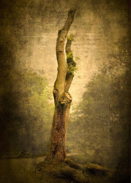 Background Greeting Card featuring the photograph Bare Tree by Svetlana Sewell