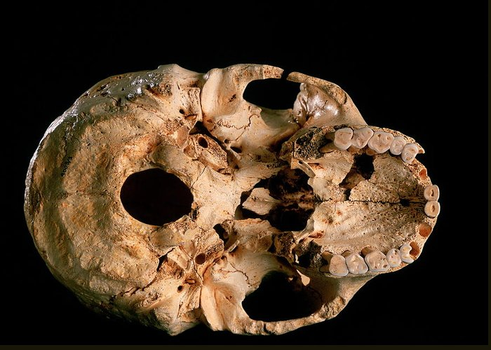 Miguelon Greeting Card featuring the photograph Base Of Skull 5, Sima De Los Huesos by Javier Truebamsf