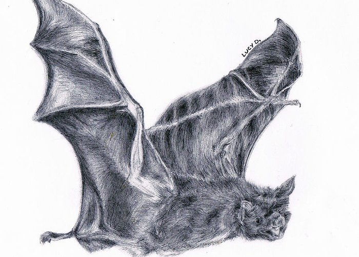 Bat Greeting Card featuring the drawing Bat by Lucy D