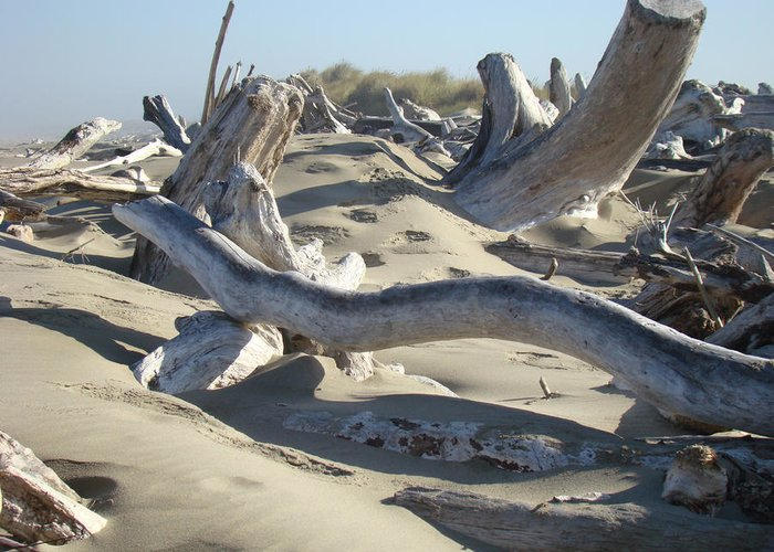 Driftwood Greeting Card featuring the photograph Beach Driftwood Art Prints Coastal Sand Dunes Shore by Baslee Troutman