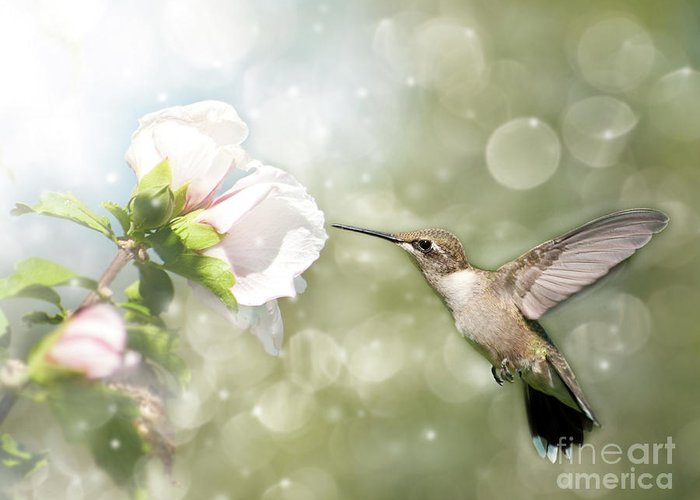 Althea Greeting Card featuring the photograph Beauty In Flight by Sari ONeal