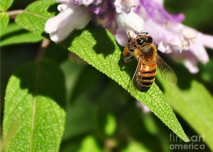Photography Greeting Card featuring the photograph Bee At Work by Kaye Menner