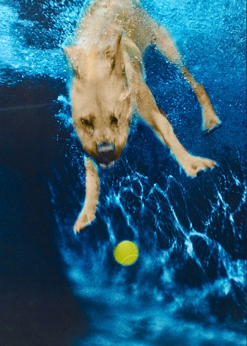 Dog Greeting Card featuring the photograph Belly Flop by Jill Reger