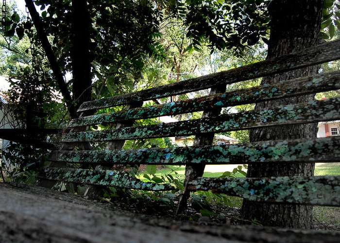 Gastonia Greeting Card featuring the photograph Benched by Tammy Cantrell