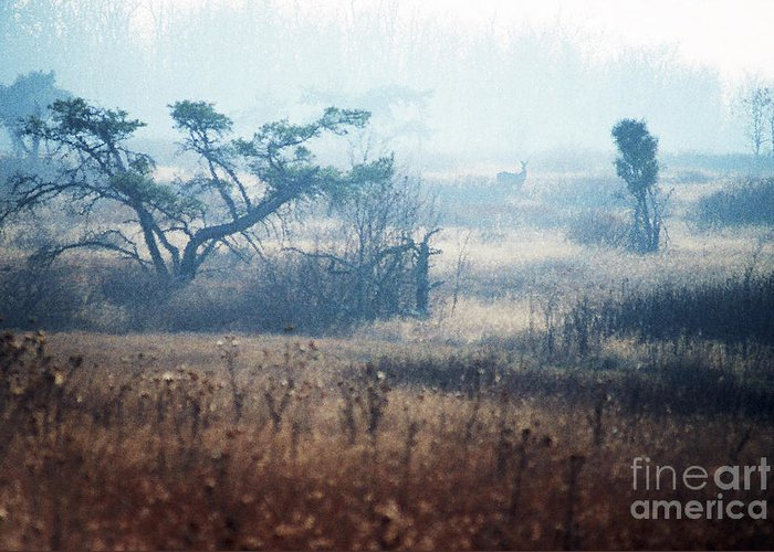 Big Meadows Greeting Card featuring the photograph Big Meadows In Winter by Thomas R Fletcher