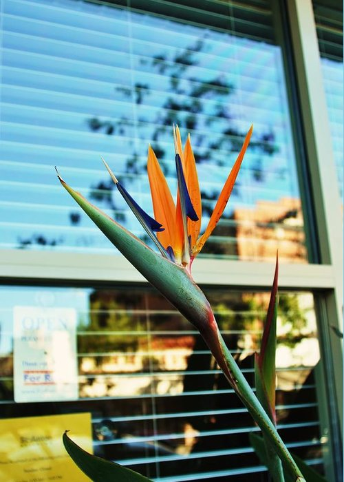 Bird Of Paradise Greeting Card featuring the photograph Bird Of Paradise-2 by Todd Sherlock