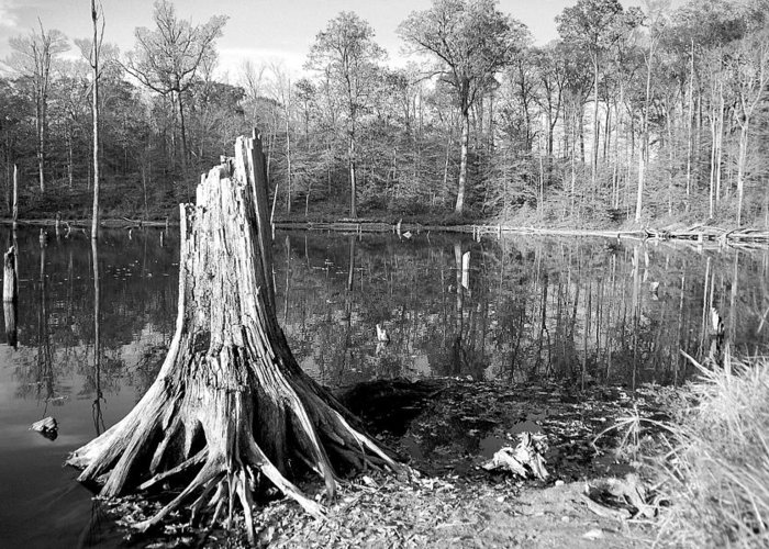 After The Leafs Greeting Card featuring the photograph Black And White Fall Alum Creek by Monica Lewis