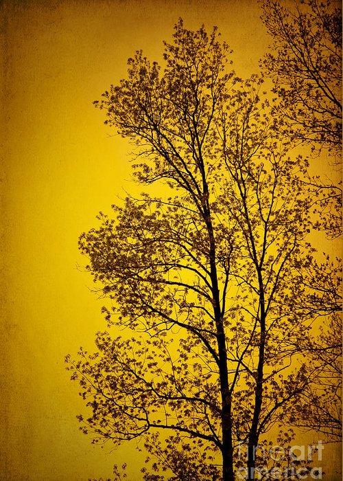 Sunset Greeting Card featuring the photograph Blazing Sunset by Cheryl Davis