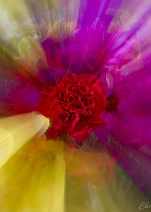 Flower Greeting Card featuring the photograph Bloom Zoom2 by Charles Warren