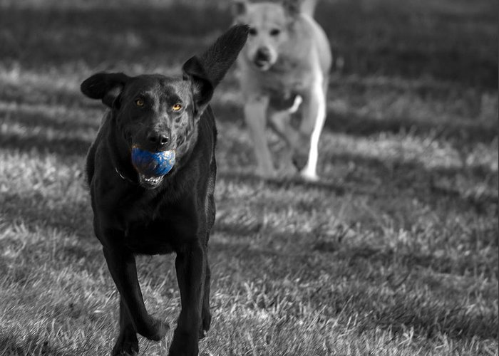 Dog Greeting Card featuring the photograph Blue Ball by Jean Noren