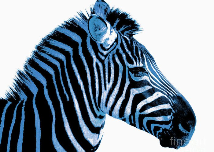 Blue Zebra Greeting Card featuring the photograph Blue Zebra Art by Rebecca Margraf