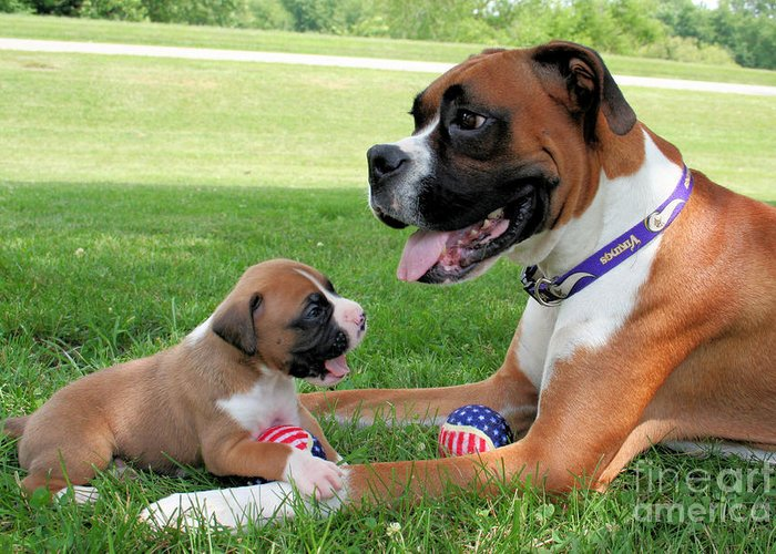 Boxer Greeting Card featuring the photograph Boxer Mommy And Pup by Renae Laughner