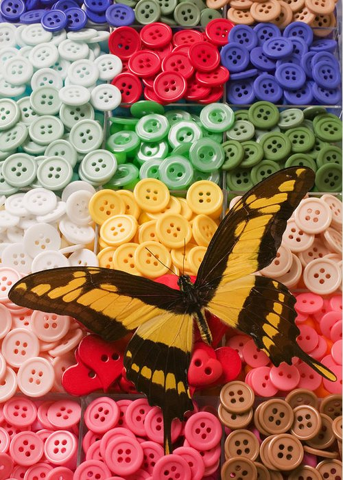 Butterfly Greeting Card featuring the photograph Butterfly And Buttons by Garry Gay