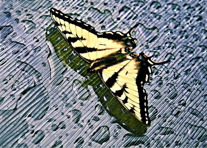 Nature Greeting Card featuring the photograph Butterfly In Rain by Susan Leggett