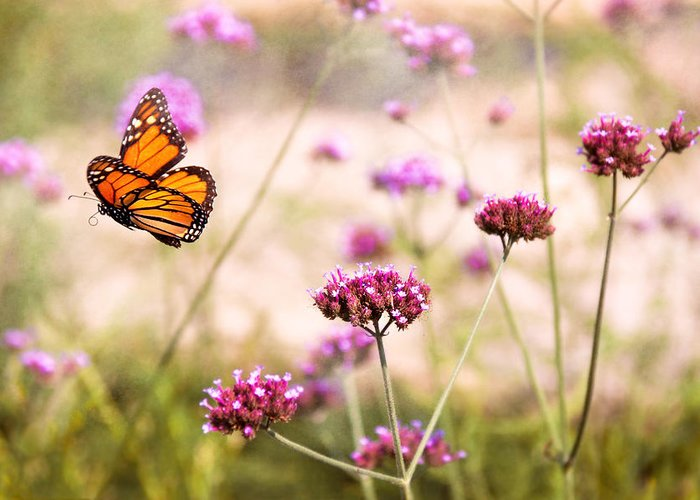 Monarch Greeting Card featuring the photograph Butterfly - Monarach - The Sweet Life by Mike Savad