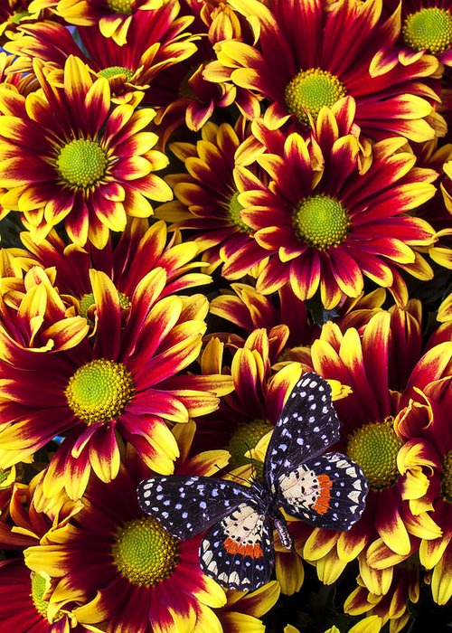 Red Yellow Daisies Greeting Card featuring the photograph Butterfly On Yellow Red Daises by Garry Gay