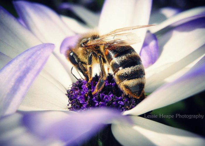 Senetti Greeting Card featuring the photograph Buzz Wee Bees by Lessie Heape
