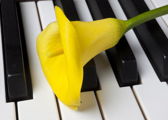 Calla Lily Greeting Card featuring the photograph Calla Lily On Keyboard by Garry Gay