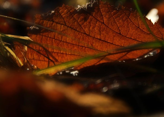 Leaf Greeting Card featuring the photograph Canopy by Odd Jeppesen