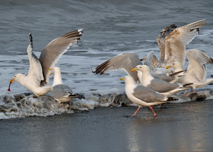 Seagulls Greeting Card featuring the photograph Catch Me If You Can by Debra Miller