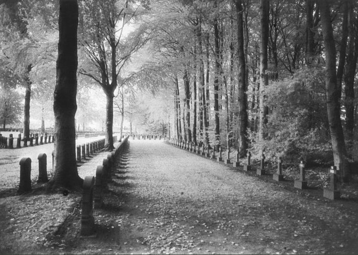 World War I; One; Wwi; Ww1; 1st; First; Great; 1; Wooded; Woods; Wood; Rows; Tombstones; Gravestones; War Tomb Greeting Card featuring the photograph Cemetery At Ypres by Simon Marsden