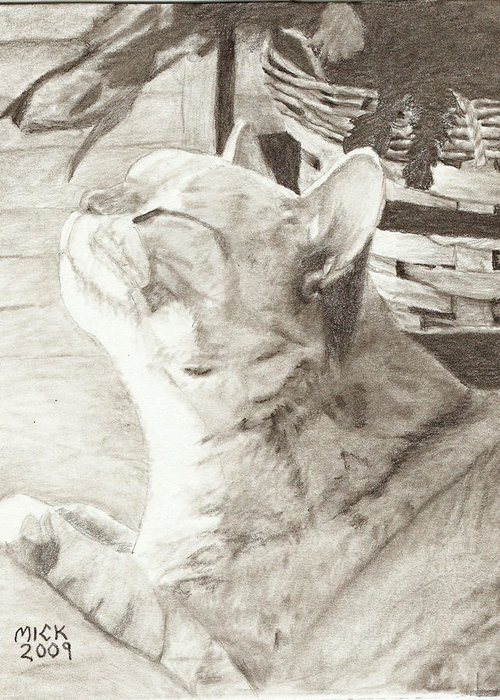 Illustration Pets Cats Art Still Life Greeting Card featuring the drawing Cepheus by Mick Hogan